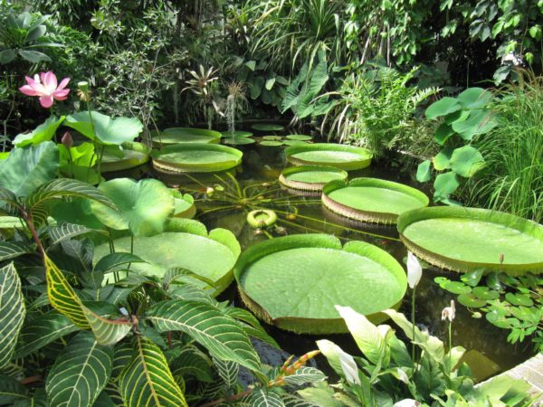In den tropischen Gewächshäuser im Parc du Moulin à Tan